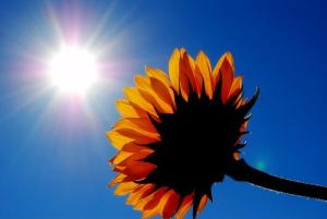 4) zonlicht