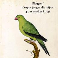 Blogsomnia